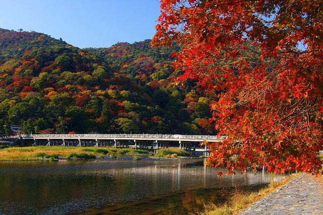 「嵐山 楓葉」的圖片搜尋結果